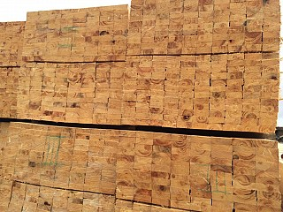 Softwood lumber in China port Shanghai KD from Russia